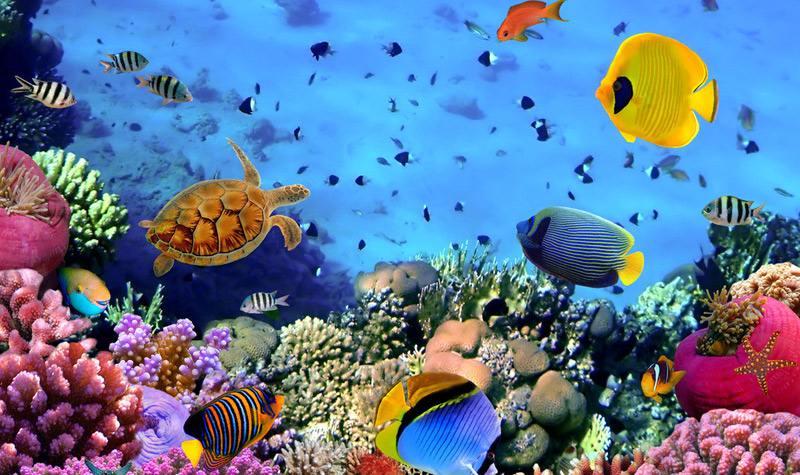 【习作】南麻小学 钮凌熙 《青岛海底世界》